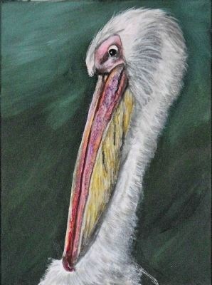 whpelican2